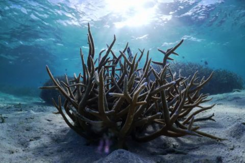 Biodiversity-coral-protection
